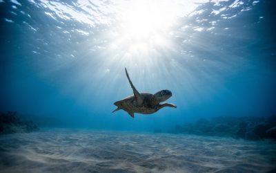 La leçon de la tortue : le pouvoir de s'introvertir