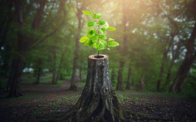 Pour servir la nature, prenons d'abord soin de notre monde intérieur.