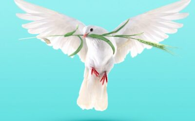 Happy International Day of Peace!