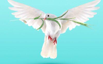 Bonne Journée internationale de la paix !